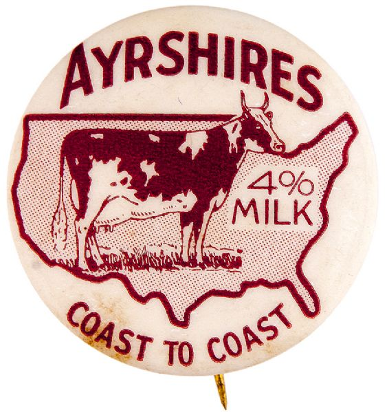 """AYERSHIRES 4% COAST TO COAST"" SHOWING DAIRY COW ON U.S. MAP RARE ADVERTISING MILK BUTTON."
